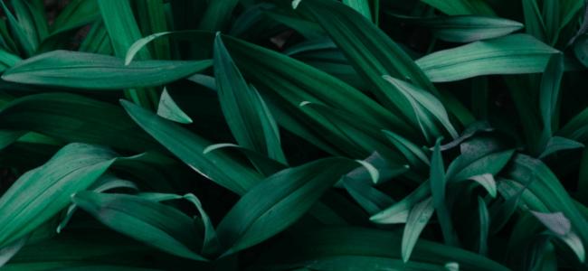 Schickes Grün für Ihren Garten